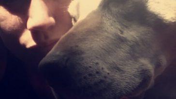 Hannah - Perro labrador